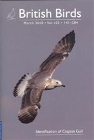 Tidningen Birds 4 nummer