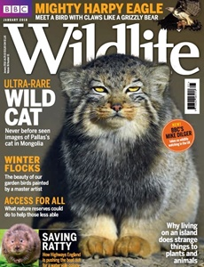 Prenumeration BBC Wildlife